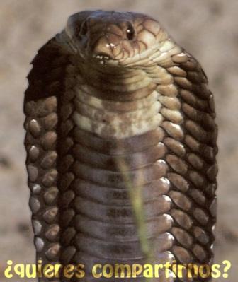 SERPIENTEPEDIA » Serpientes. Enciclopedia Especializada