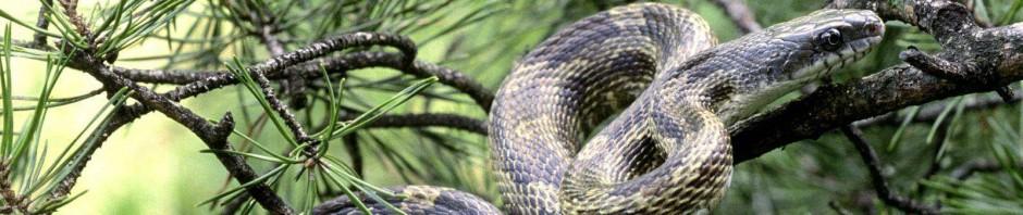 Para nuestras arrastradas:las serpientes(super mega post)