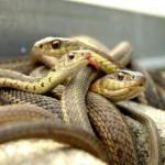 serpientes pequenas