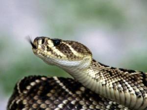 serpiente espalda de diamante