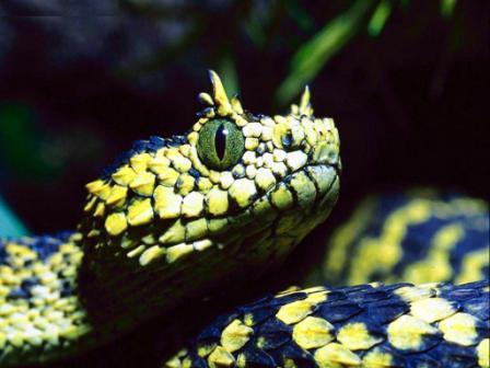 serpiente con cuernos