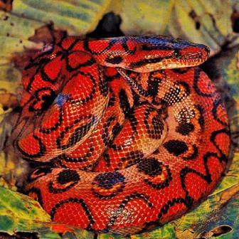 serpiente de maiz