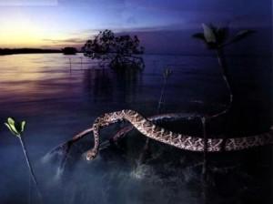 serpiente en el agua