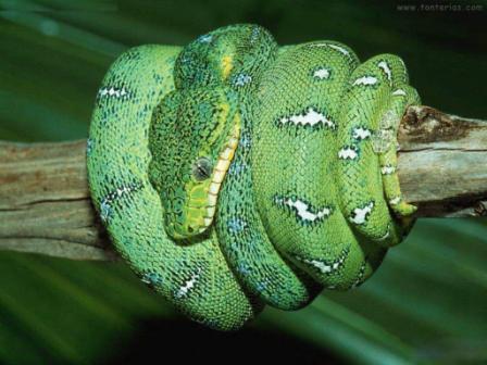 serpiente_verde