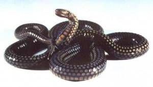 serpiente de adorno