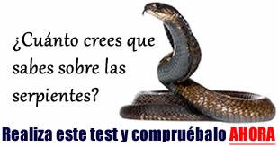 Caractersticas de las serpientes  SERPIENTEPEDIA